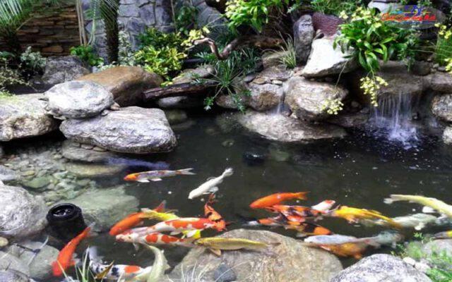 hồ cá koi sân vườn đẹp - 10